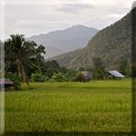 Northern Thailand 2010