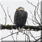 Eagles Run Squamish 2018