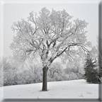 Winnipeg Frost 2010