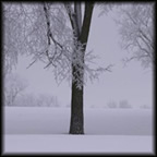 Winnipeg Winter