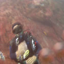 Galapagos Underwater with LIQUID IMAGE goggles